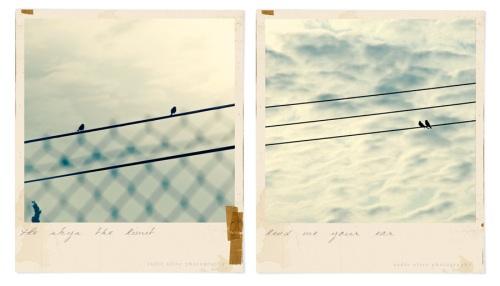 birdseries